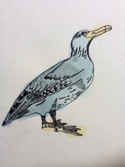 Little Rockit Bird