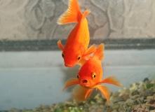Surprised Fish